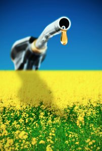 Biodiesel Fuel